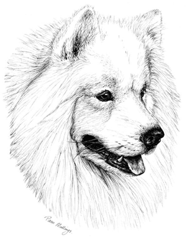 samoyed puppy receipt book