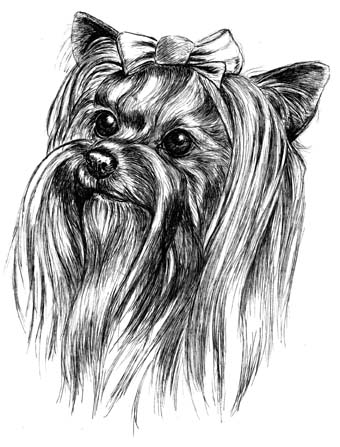 Yorkshire terrier business cards print by townsend yorkshire terrier business cards reheart Choice Image