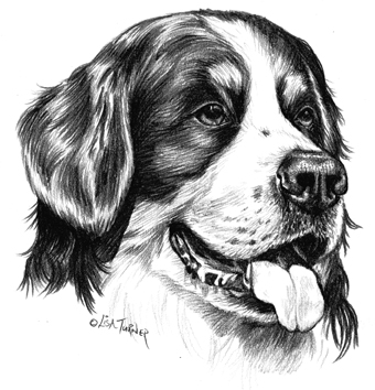 Bernese Mountain Dog Letterheads - Print By Townsend