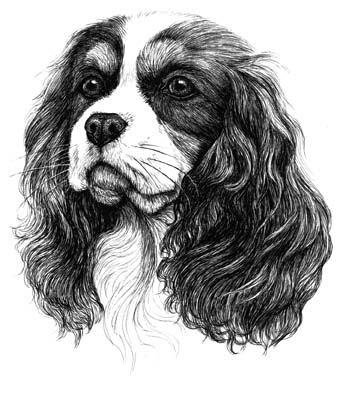 Cavalier King Charles Spaniel Personalised Note Pad - Print By Townsend